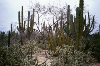 #1: A view of cactus at the confluence point