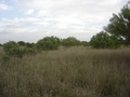 #2: South View, the savanna where we saw deer and wild boar