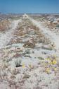 #5: Road with desert flowers close to confluence