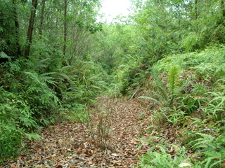 #1: A general view along the unused overgrown logging trail