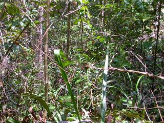 #1: View of the area where the confluence point is located