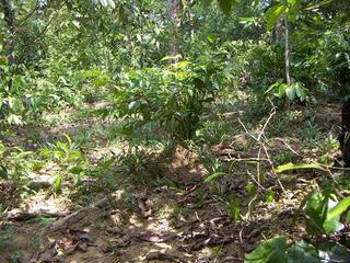 #1: The area of the confluence. The small clearing in the low forest and bush land is about 10 m wide.