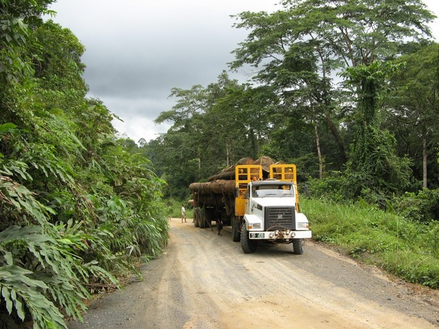 This part of the Danum Valley is open to logging.