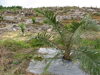 #1: View facing west. The confluence is at the base of the young palm tree in the foreground.