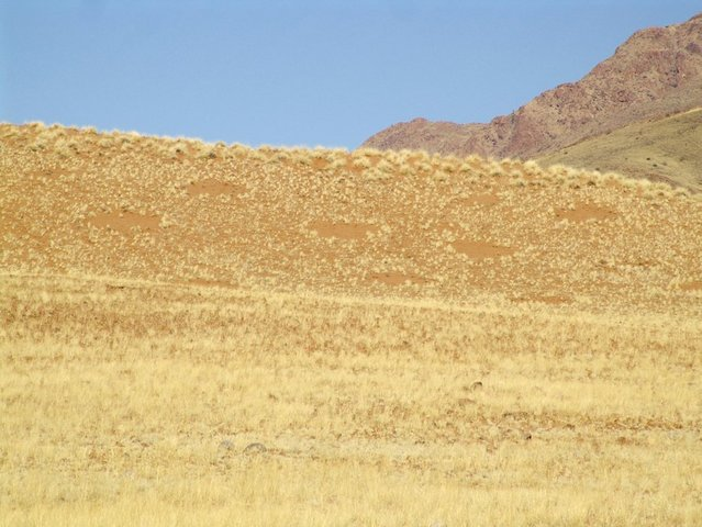 Hill with fairy circles