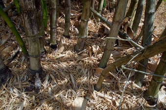 #1: The confluence point lies inside a patch of bamboo