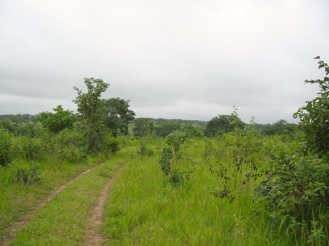 Road leading to the Confluence