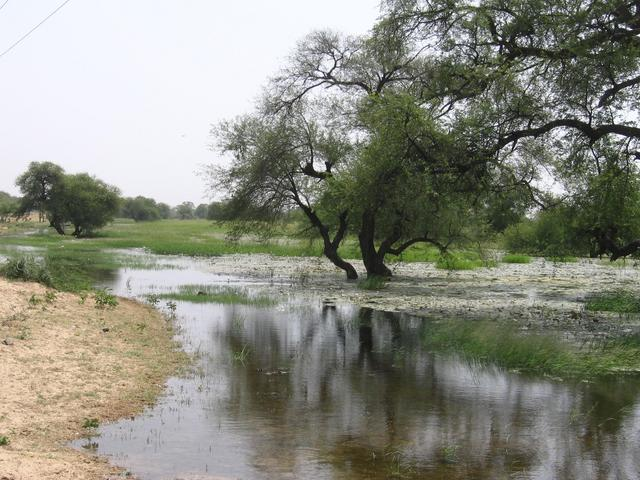 Wetland outside Damasak