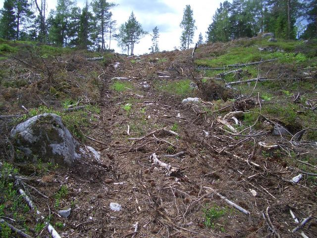 The loggers' track