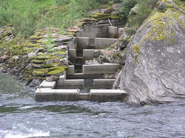 Spawning salmon can pass this dam using a fish ladder