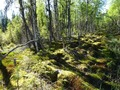 #9: Hiking over mossy ground