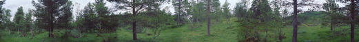 #1: Panorama with a lot of trees (and a hill from which the overview picture is taken from)