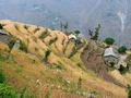 #8: Terraced farmland typical of the area
