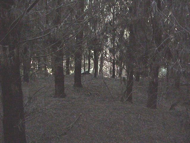 Forest near the confluence site.