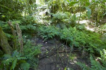 #1: The confluence point lies at the bottom of a gully - filled with ponga ferns
