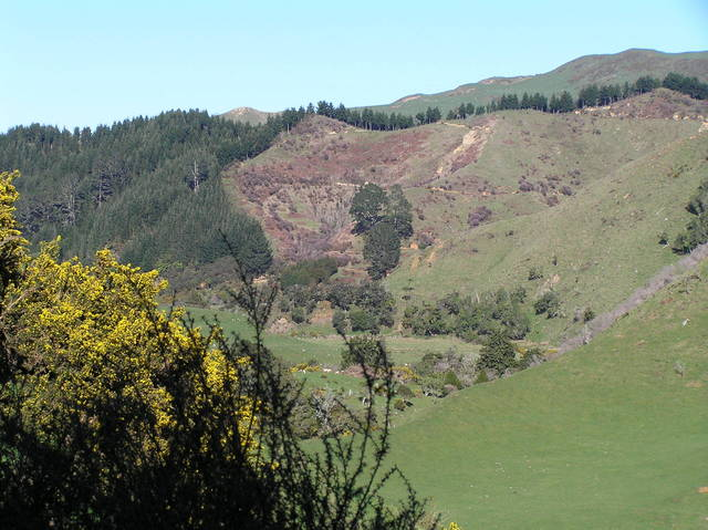 View to the west from the confluence, with invasive gorse in foreground.