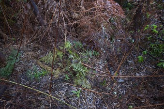 #1: The confluence point lies partway up a steep hill, in this jumbled patch of ferns