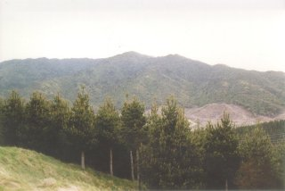 #1: Looking east towards Mt Wainui with the confluence point lying in the forest near the bottom left edge.