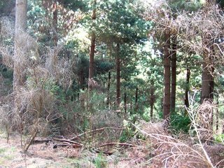 #1: The Confluence from 30m Distance