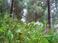 #4:  View to the West