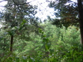 #5:  View to the North