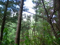 #6:  View to the East