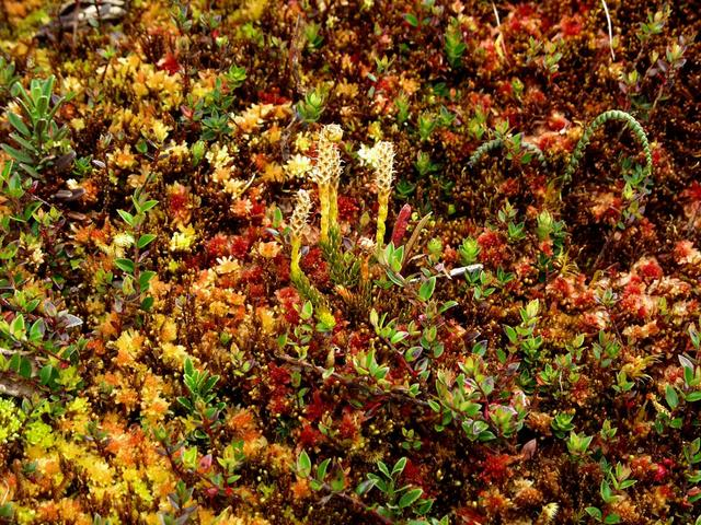 The ground cover is half tussock grass and half mixed mosses and tundra plants