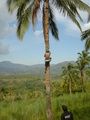 #3: Fresh coconuts to order.
