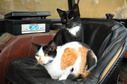 #9: Lazy cats sitting on the seat of a tractor