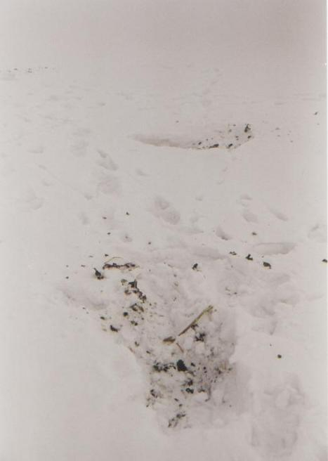 Hare's tracks of CP