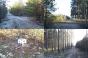 #9: Nearby forest roads' junction