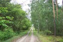 #9: Nearby forest road (view towards E)