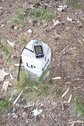 #10: Forest compartment marker