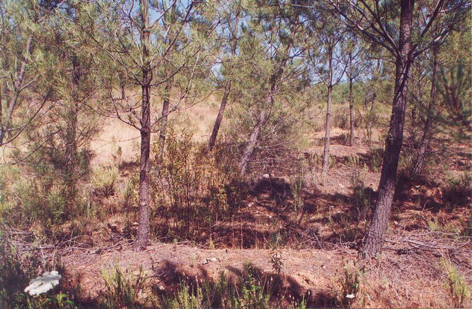 East facing into the scrub
