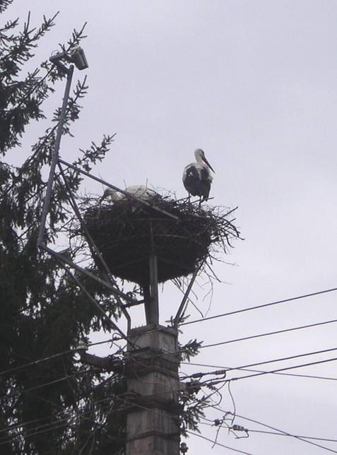 Storks keep an eye on local villages