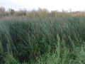 #2: Overgrown water channel in the East