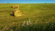 #10: hayharvest south of confluence