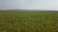 #3: grassland soutward - Altai mountains