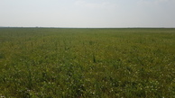 #4: grassland eastward - trees function as windbreak