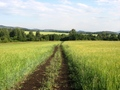#9: Field dirt road. 500 m from the confluence