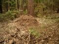 #5: Ant hill near our CP