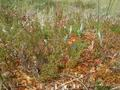 #9: Vegetation in the moor...
