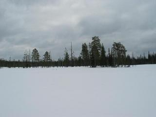 #1: Bog in the winter