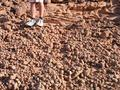 #6: The strange sandstone balls that littered the ground at the campsite
