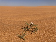#10: Single Flower in the Desert