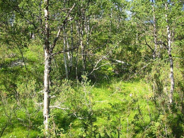 Overview from 18 m east. Confluence is just beyond the right edge of the fallen birch trunk.