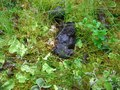 #8: Bear droppings(?)