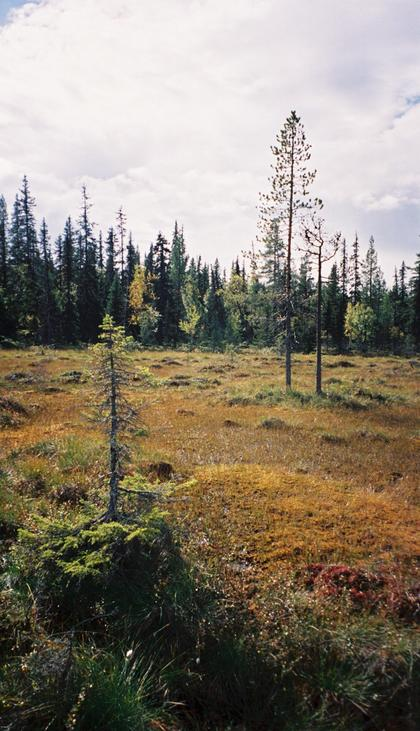 Bog in the vicinity of the confluence.