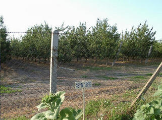 #1: An apple plantation and a confluence just beyond the fence