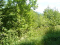 #2: View towards NE from the path - Widok w kierunku NE ze ścieżki